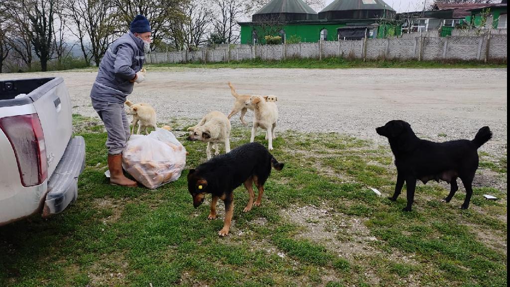 Sokak Hayvanlarına Büyükşehir Desteği Devam Ediyor