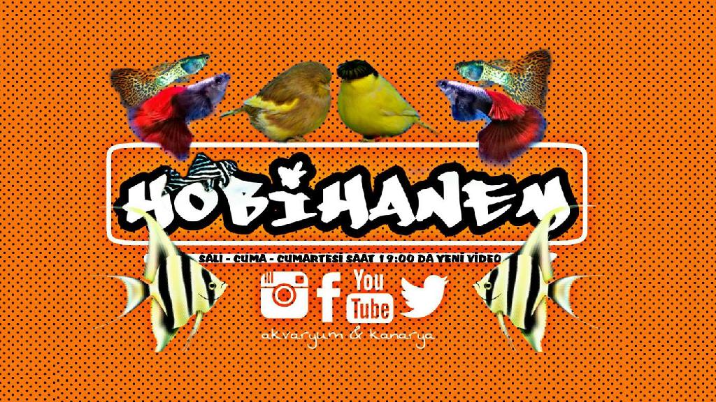 Hobihanem (Youtube Kanalı)