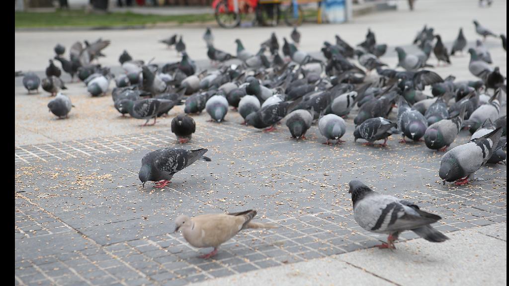 Belediye Ekipleri Şehir Kuşları İçin Yem Dağıttı