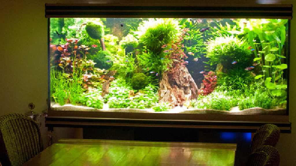 Habitat Biyotop Akvaryum Üçlemi